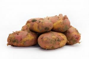 Картофель  красный свежий урожай (Алтай) вес. 1 кг.