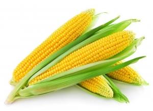Кукуруза (свежий урожай) 1 кг.